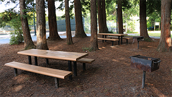 Ocean View Park Spruce Picnic Area Picnic Rentals City Of Albany CA - Spruce picnic table