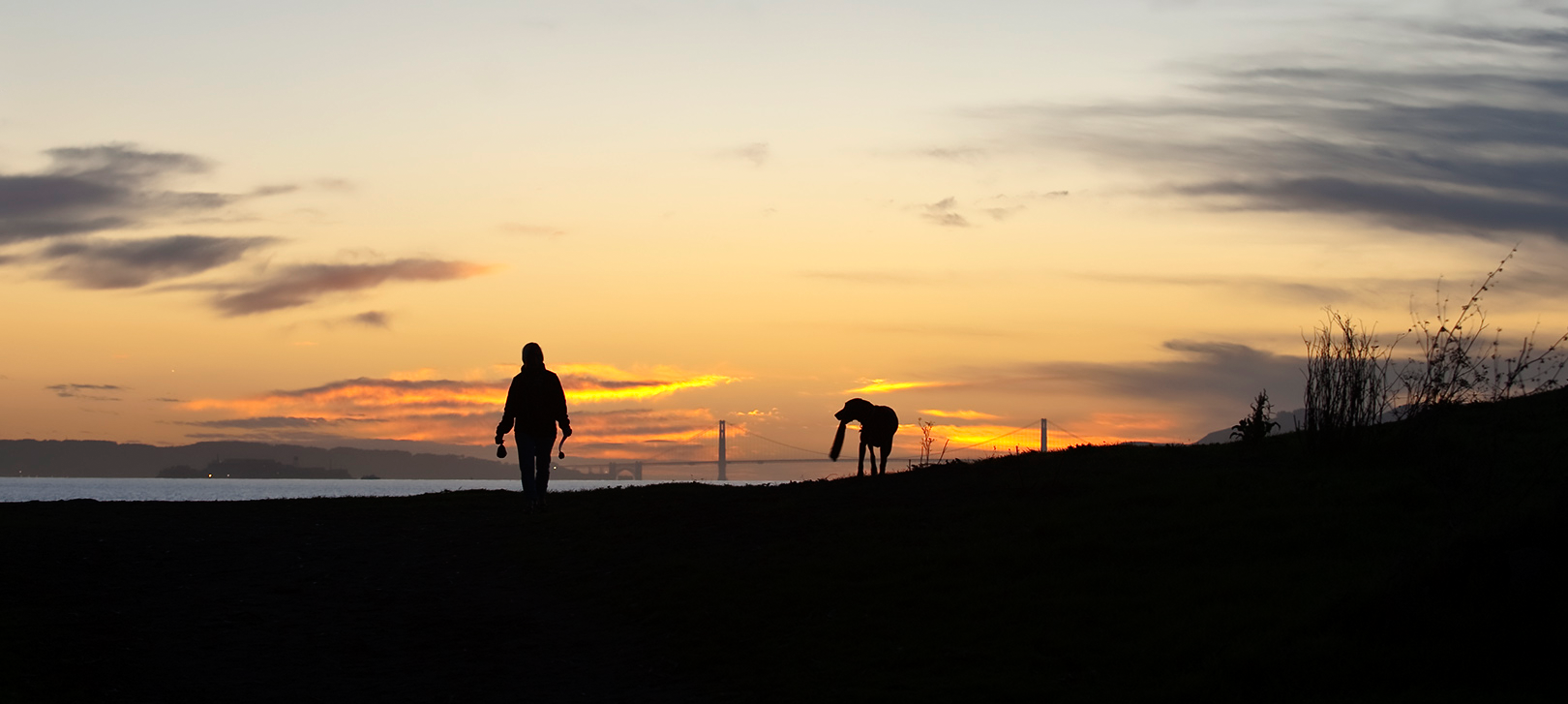 Albany Beach person walking dog